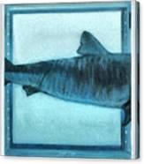 Shark In Magic Cubes - 2 Of 3 Canvas Print