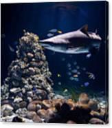 Shark In Zoo Aquarium Canvas Print