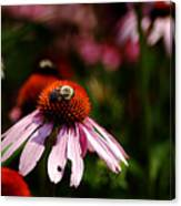 She Loves Bee She Loves Bee Not Canvas Print