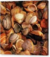 She Sells Sea Shells Canvas Print