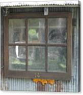 Shed Window Canvas Print