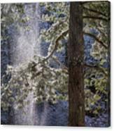 Shedding Snow Canvas Print