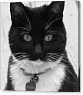 Sheeba In Black And White Canvas Print