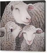 Sheep Ahoy Canvas Print