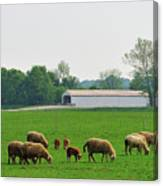 Sheep And Covered Bridge Canvas Print