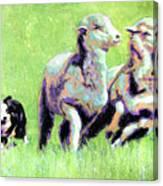 Sheep And Dog Canvas Print