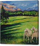 Sheep At Dusk Canvas Print