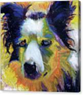 Sheep Dog Canvas Print