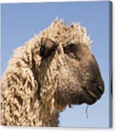 Sheep In Profile Canvas Print