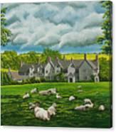 Sheep In Repose Canvas Print