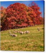 Sheep In The Autumn Meadow Canvas Print