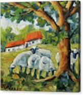 Sheep On The Farm Canvas Print