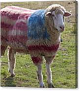 Sheep With American Flag Canvas Print