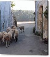 Sheeps Of Crete Canvas Print