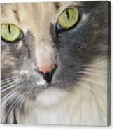 Shelby's Eyes 4 Canvas Print