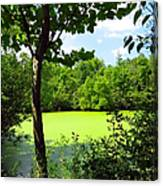 Sheldon Marsh Algae Pond Canvas Print
