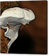 Shelf Fungus On Bark - Quinault Temperate Rain Forest - Olympic Peninsula Wa Canvas Print
