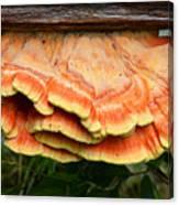 Shelf Mushroom Canvas Print