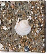 Shell 1 Canvas Print