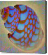 Shellish Canvas Print