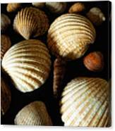 Shell Art - D Canvas Print