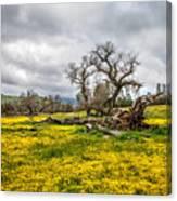 Shell Creek Awash In Yellow Canvas Print