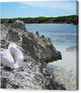 Shell On Dominican Shore Canvas Print