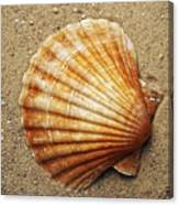 Shell On The Sand Canvas Print