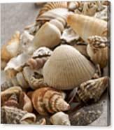 Shellfish Shells Canvas Print