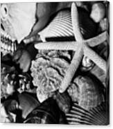 Shells And Starfish In Black And White Canvas Print