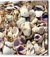 Shells Aplenty Canvas Print