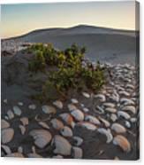 Shells At Desert Canvas Print