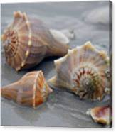 Shells For Barb Canvas Print