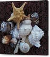 Shells In A Basket ll Canvas Print