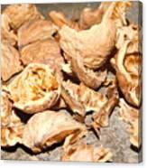 Shells Of Nut Canvas Print