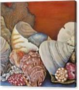 Shells On Shelf Canvas Print