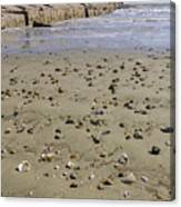 Shells On The Beach Canvas Print
