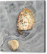 Shells On The Beach II Canvas Print
