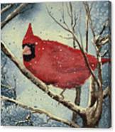 Shelly's Cardinal Canvas Print