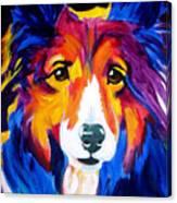 Sheltie - Missy Canvas Print