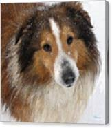 Sheltie In The Snow Canvas Print