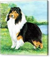 Sheltie Wait Canvas Print