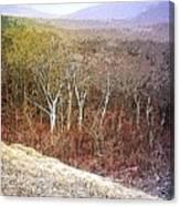 Shenandoah Wilderness Canvas Print