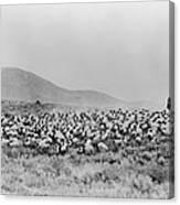 Shepherd And Flock, C1942 Canvas Print