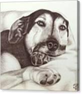 Shepherd Dog Frieda Canvas Print