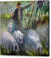 Shepherd... Canvas Print
