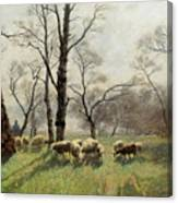 Shepherd With His Flock In The Evening Light Canvas Print