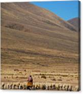 Shepherding Canvas Print