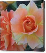 Sherbert Rose Canvas Print