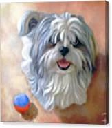 Sherman Canvas Print